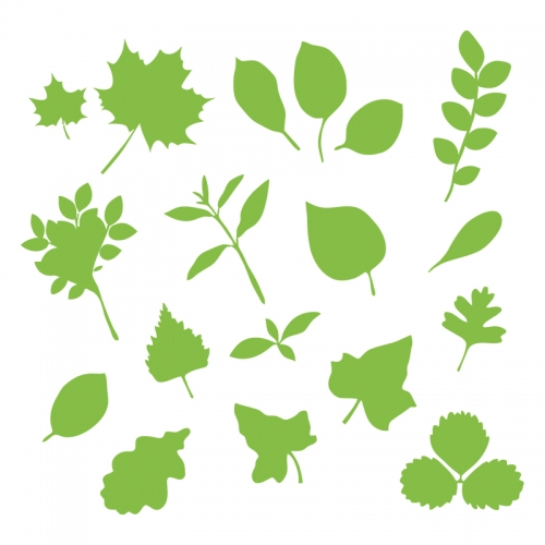 Various-plant-leaves.png